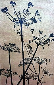 Hogweed in Gold - pen & ink/acrylic
