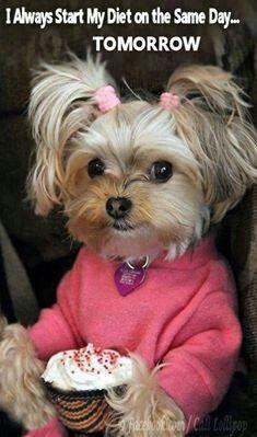 Such A Cute Little Dog Animals Pinterest Little Dogs My