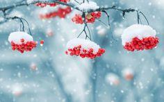 Скачать обои природа, рябина, красные, ягоды, rowan berry, раздел природа в разрешении 1440x900