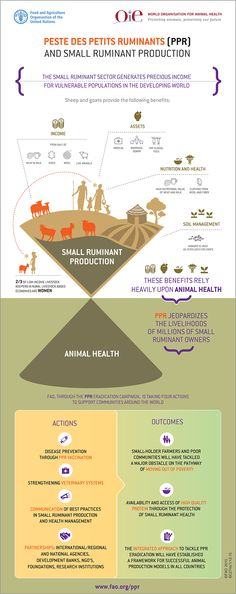 Peste des Petits Ruminants (PPR) and Small Ruminant Production