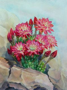 Watercolor Painting of Cactus Flowers Botanical by ElenaRoche
