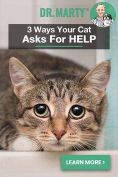 3 Ways Your Cat Asks for Help I Love Cats, Crazy Cats, Cute Cats, Pretty Cats, Beautiful Cats, Kittens Cutest, Cats And Kittens, Animals And Pets, Cute Animals