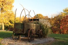 Old fashion wagon surrounded by fall colors