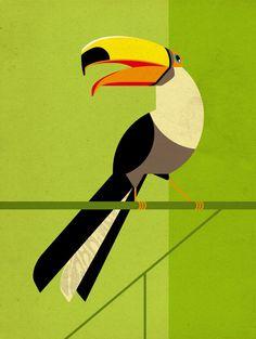 Tucan als Premium Poster von Dieter Braun Art Prints Uk, Framed Art Prints, Canvas Prints, Vogel Illustration, Graphic Design Illustration, Poster Online, Art Mural, Wall Art, Art Graphique