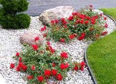 Почвопокровные розы фото, посадка и уход, сорта