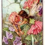 Sweet Pea Flower Fairy