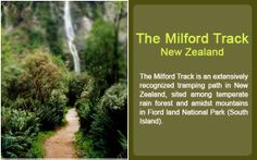 The Milford Track (New Zealand) this is an extensively recognized tramping path in New Zealand, sited among temperate rain forest and amidst mountains in Fiord land National Park (South Island).  #rainforest  #rainforestadventures  #milfordtrack  #rainforests