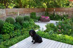 Family garden in Putney   Charlotte Rowe Garden Design
