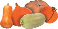 Courges,Squash,Marrow Types in French.