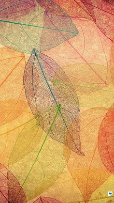 papers.co-vm23-rainbow-color-leaf-art-fall-nature-pattern-33-iphone6-wallpaper