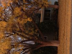 Fall in Boise Idaho