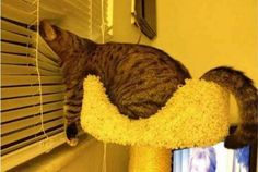 56 Cute Cats Sleeping in Crazy Awkward Positions - Snappy Pixels