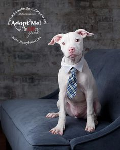 Look at this great dog available for adoption at Animals First Foundation of Texas. Contact: affoftx@gmail.com