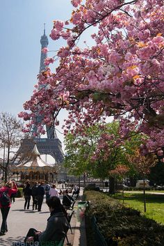 Effiel tower. Spring, Paris sweet home
