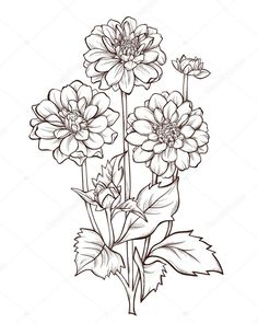 Illustration of dahlia flower isolated on white background. vector art, clipart and stock vectors. Flower Line Drawings, Flower Sketches, Art Sketches, Art Drawings, Rose Flower Sketch, Dahlia Flower Tattoos, Flower Art, Illustration Blume, Botanical Illustration