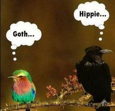 Goth and Gay Birds. Surely you have a sense of humor? Funny Birds, Funny Animals, Cute Animals, Angry Animals, Talking Animals, Animal Fun, Humor Grafico, Bird Feathers, Black Feathers