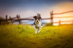23 Photos of man's best friend. with a cat thrown in there once for good measure. All images available to license through the Marketplace. Mans Best Friend, New Friends, Cat Throw, Man Photo, Boston Terrier, Husky, Adventure, Cats, World