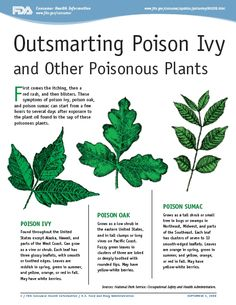 """Outsmarting Poison Ivy and Other Poisonous Plants"" is a great handout from the FDA that provides a concise and thorough guide on how to identify poisonous plants, how to avoid adverse reactions, and how to treat those reactions when they occur."