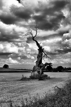 love this black and white tree and sky!