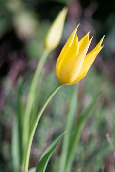 Spring Crown | Flickr - Photo Sharing!