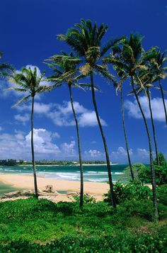 Lydgate Beach Park, Kapaa, Kauai, Hawaii. Why Wait. The World Awaits Your Footprints. www.whywaittravels.com 866-680-3211 #travelspecialist  Facebook: Why Wait Travels -- CruiseOne Twitter: @contreniatrvels