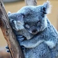 ... ▫️Momma With Her Baby! ▪️By Unknown