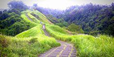 Rice Paddy Trekking -  Campuhan