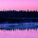 Pink Morning by David Recht