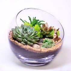 Флорариум – это неповторимая композиция из живых растений, которая потребует минимального ухода. Флорариум – эксклюзивный подарок близким, любимым, друзьям, коллегам и партнерам.    Эта яркая летняя композиция из суккулентов долго будет радовать Вас и Ваших близких. Флорариум добавит гармонии в ваше персональное пространство, подчеркнет ваше настроение и индивидуальность.  Растения: эхеверия, крассула, седум, молодило Диаметр: 20 см