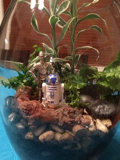 Star Wars terrarium - I made this and it's freaking amazing! Star Wars terrarium - I made this Air Plant Terrarium, Garden Terrarium, Star Wars Wedding, Star Wars Party, Decoracion Star Wars, Star Wars Bathroom, Star Wars Classroom, Star Wars Decor, Star Wars Christmas