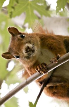 You better not be laughing at me....(Feelin' Squirrely group board)