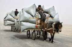 Uighur men ride their horse carts during a sandstorm as they deliver hay around the Paklamakan desert, some miles) east to Yecheng, in the region of Xinjiang April (Photo by Nir Elias/Reuters) Horse Transport, Horse Cart, Man On Horse, Used Bikes, Force And Motion, Horse Drawn, Silk Road, Carry On, Camel
