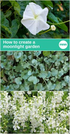 Do you know how to make your garden light up at night? The answer (and this is not a trick question!) is to create a moonlight garden.