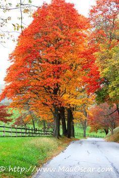 Outono nos EUA - Brandywine Valley em Delaware  (20)