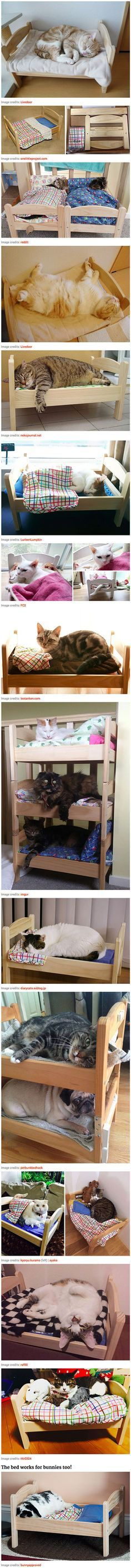 DIY Cat Scratching Post That Literally Lasts For Years Diy Cat - 22 awesome pieces furniture every cat owner will love