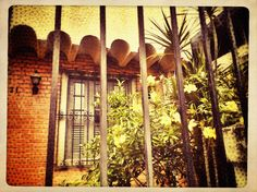 530 - Flores atrás das grades #umafotopordia #picoftheday #brasil #brazil #n8 #snapseed #pixlromatic+