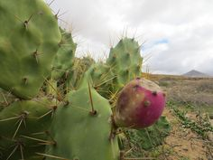 Fuerteventura Go to Fuerteventura and discover a flawless coast with emerald green seas and over 150 km of bright white…