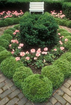 Instead of a buxus hedge do them as balls, mass plant with white carpet roses