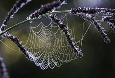 Spider Webs Wall Art - Photograph - Pearl Drops On Silk by Dale Kincaid Spider Art, Spider Webs, Nature Pictures, Beautiful Pictures, Belleza Natural, Patterns In Nature, Amazing Spider, Art Pages, Portraits
