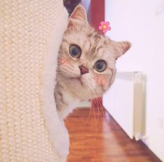 It's adorable and sweet cats, kawaii❣️😽 . Cute Cats And Dogs, I Love Cats, Cats And Kittens, Pretty Cats, Beautiful Cats, Cute Cat Memes, Cat Icon, Kawaii Cat, Cute Baby Animals