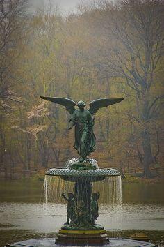 Central Park. NY, NY