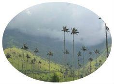 Estuvimos en el Valle de Cocora (Colombia) y te lo contamos en nuestro Blog