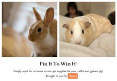 Have a guinea pig, rabbit or another small animal at home that deserves some extra love? Repin this to win all kinds of goodies for your little one!