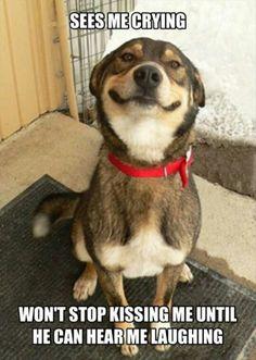 Best dog bestie