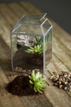 Sale Price:	$41.25 Small Zinc and Glass Terrarium