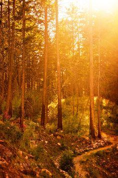 Evening among the trees in Hamilton, Montana