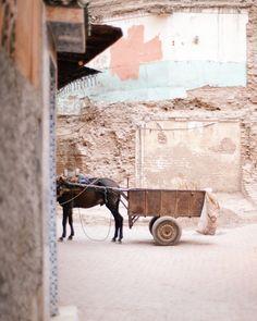 Morocco | Alpha Smoot