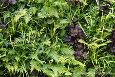 A close up of the vertical planting in the living wall featured in the Wellbeing of Women Garden.
