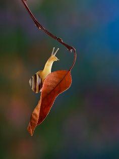 fotografia-macro-caracoles (13)