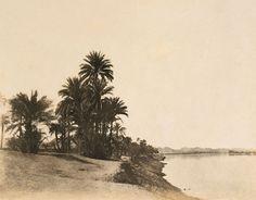 Palmiers-dattiers au bord du Nil (Le Nil, pl. 56) 1854 Papier salé d'après négatif papier. 23 x 30 cm